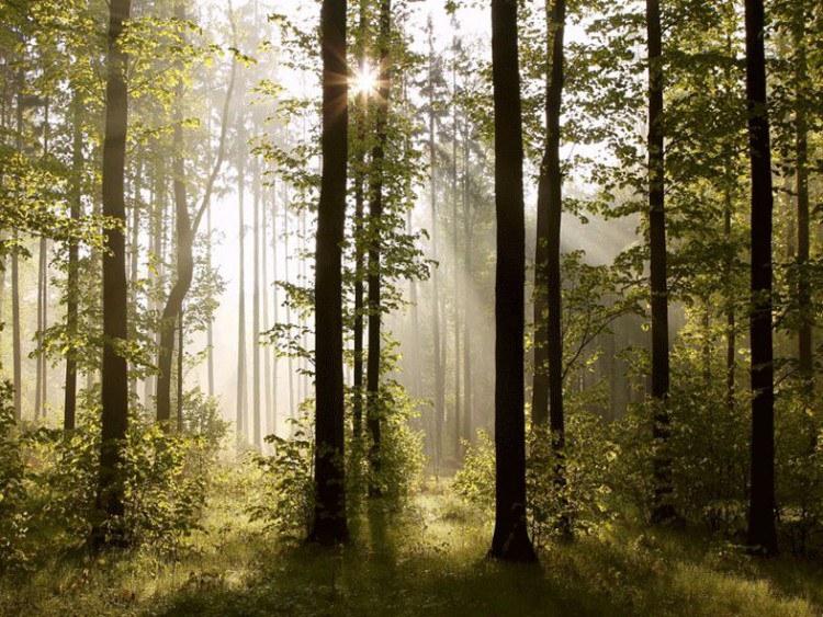 Fototapeta 8dílná lesní | Fototapety - FOTOTAPETY 8 DÍLNÉ