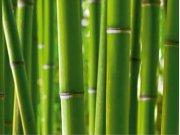 Fototapeta Bambus FTNS-2445, rozměry 360 x 270 cm Fototapety vliesové