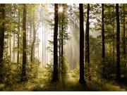 Fototapeta Ranní les FTNS-2447, rozměry 360 x 270 cm Fototapety vliesové