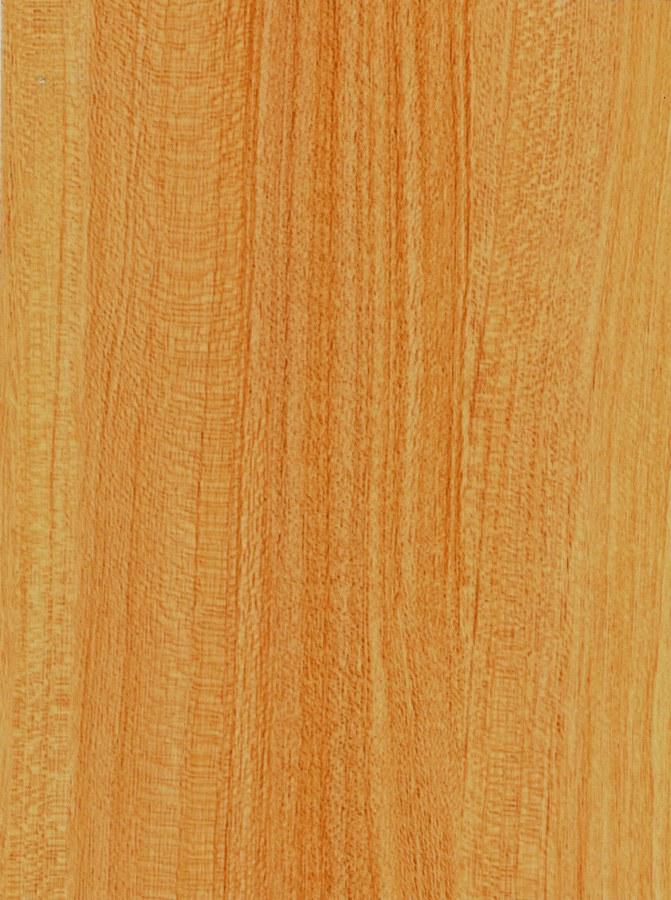 Samolepící fólie na dveře Buk nevada 99-6130 | 2,1 m x 90 cm - Tapety samolepící