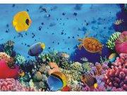 Fototapeta Mořský svět FTNXXL-0375, rozměry 360 x 270 cm Fototapety vliesové