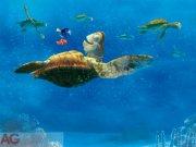 Fototapeta Nemo a velká Želva FTDXXL-2228, rozměry 360 x 255 cm Fototapety pro děti - Rozměr 360 x 255 cm