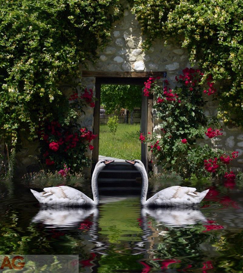 Fototapeta Swans FTNXL-2536, rozměry 180 x 202 cm - Fototapety vliesové