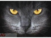 Fototapeta Eyes FTNM-2640, rozměry 160 x 110 cm Fototapety vliesové
