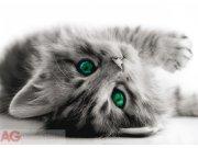 Fototapeta Pussy FTNM-2605, rozměry 160 x 110 cm Fototapety skladem