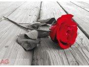 Fototapeta Red rose FTNM-2619, rozměry 160 x 110 cm Fototapety skladem