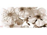 Fototapeta Květiny FTG-0906, rozměry 202 x 90 cm Fototapety skladem