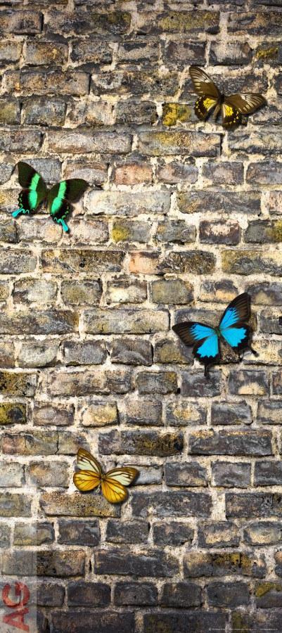 Fototapeta Butterfly on the Wall FTV-1519, rozměry 90 x 202 cm - Fototapety papírové
