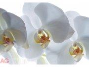 Fototapeta White Orchid FTSS-0832, rozměry 180 x 127 cm Fototapety papírové