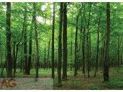 Fototapeta Listantý les FTNM-2656, rozměry 160 x 110 cm Fototapety vliesové