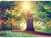 Fototapeta Strom v parku FTM-0851, rozměry 160 x 115 cm Fototapety skladem