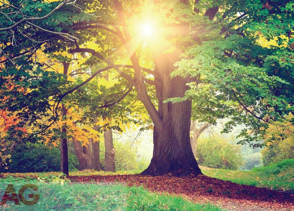 Papírová fototapeta Strom v parku FTM0851, rozměry 160 x 115 cm   Fototapety Fototapety skladem
