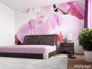 Fototapeta Violet Orchid big FTS-0049, rozměry 360 x 254 cm Fototapety papírové