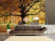 Fototapeta Listnatý strom v parku FTNXXL-2427, rozměry 360 x 270 cm Fototapety skladem