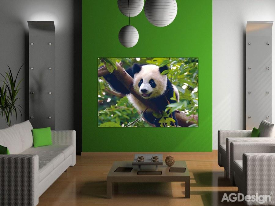 Fototapeta Panda FTNM-2610, rozměry 160 x 110 cm - Fototapety skladem