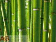 Fototapeta Bambus FTS-0170, rozměry 360 x 254 cm Fototapety skladem